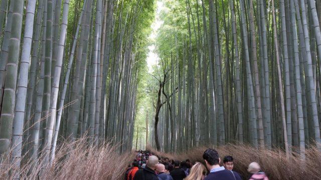Padurea de bambusi