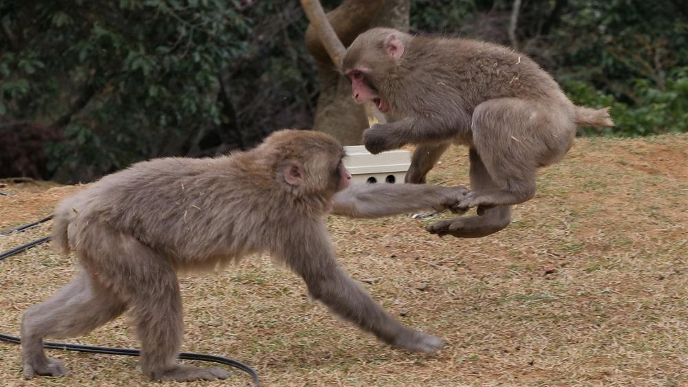 Padurea de maimute