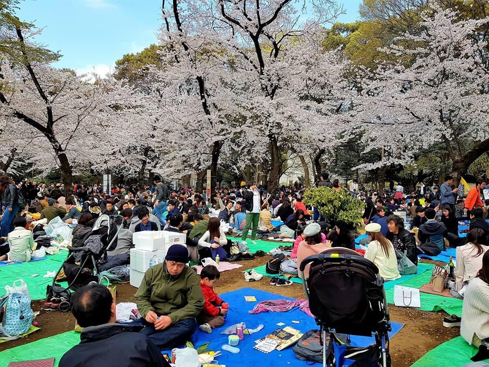 picnic in Ueno Park