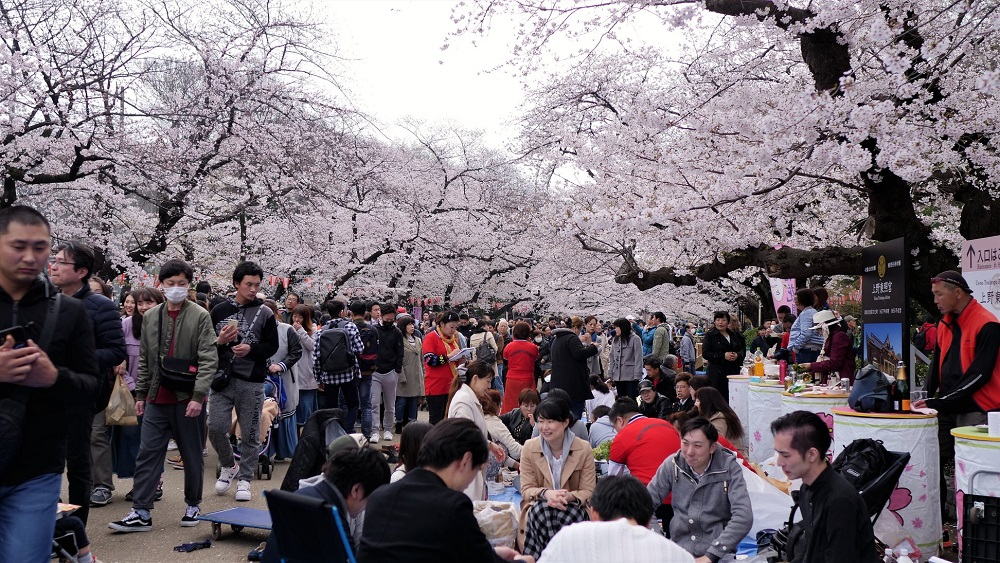 ueno park picnic